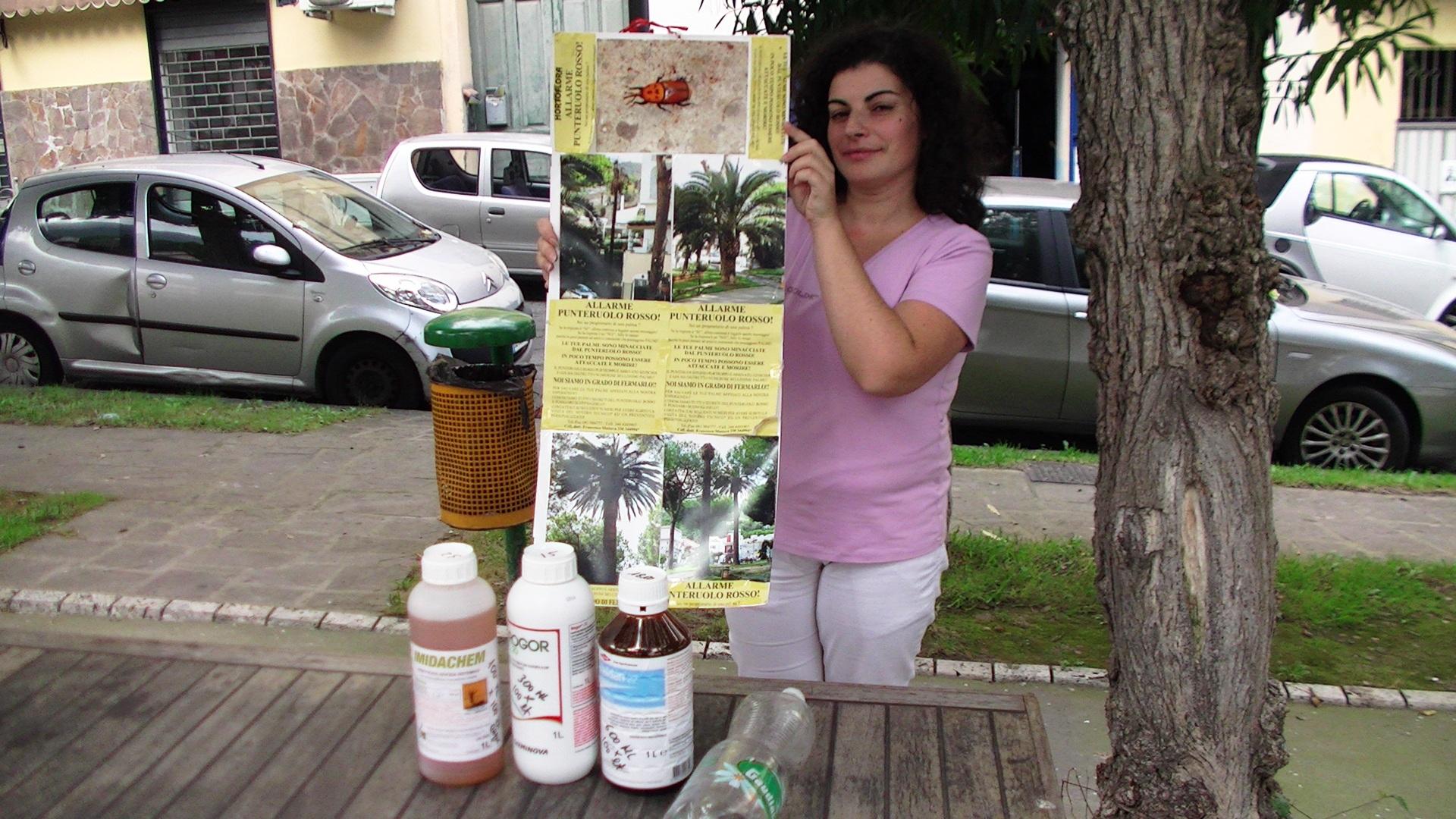 L'importante impegno  di residenti e commercianti per salvare le piante di piazza Bagni