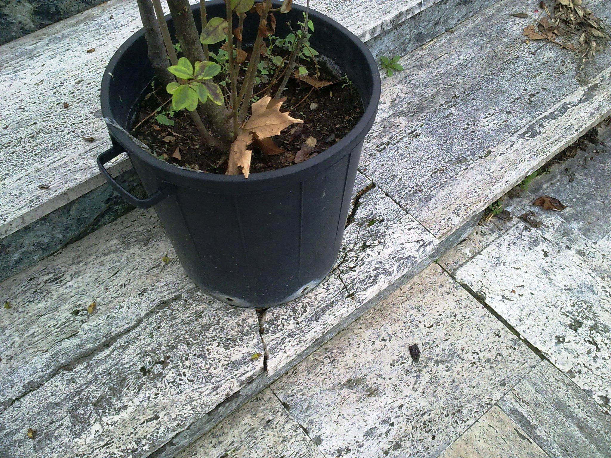 Il vaso contenente  la pianta posizionato sul gradino della scalinata della scuola